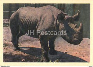 Rhinoceros - Moscow Zoo - 1963 - Russia USSR - unused - JH Postcards