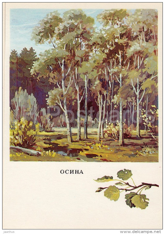 Aspen - Populus - Russian Forest - trees - illustration by G. Bogachev - 1979 - Russia USSR - unused - JH Postcards