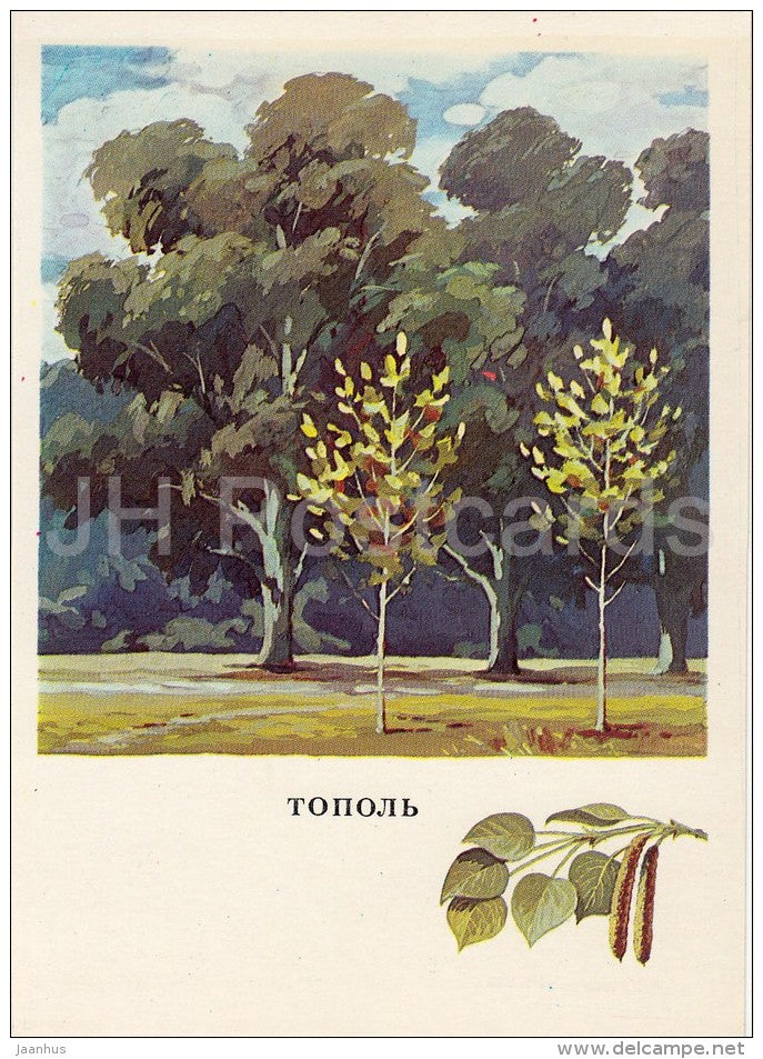 Poplar - Russian Forest - trees - illustration by G. Bogachev - 1979 - Russia USSR - unused - JH Postcards
