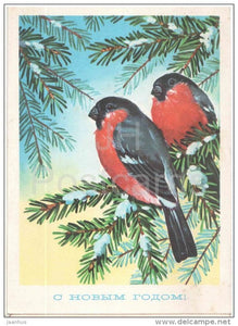 New Year Greeting Card by G. Kurtenko - bullfinch - stationery - 1977 - Russia USSR - unused - JH Postcards