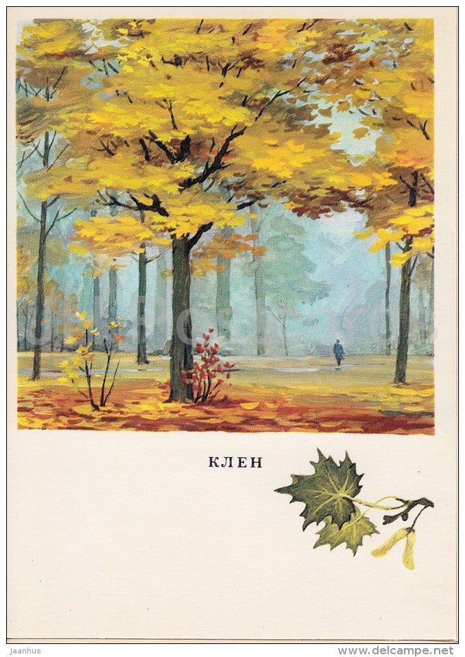 Maple - Acer - Russian Forest - trees - illustration by G. Bogachev - 1979 - Russia USSR - unused - JH Postcards