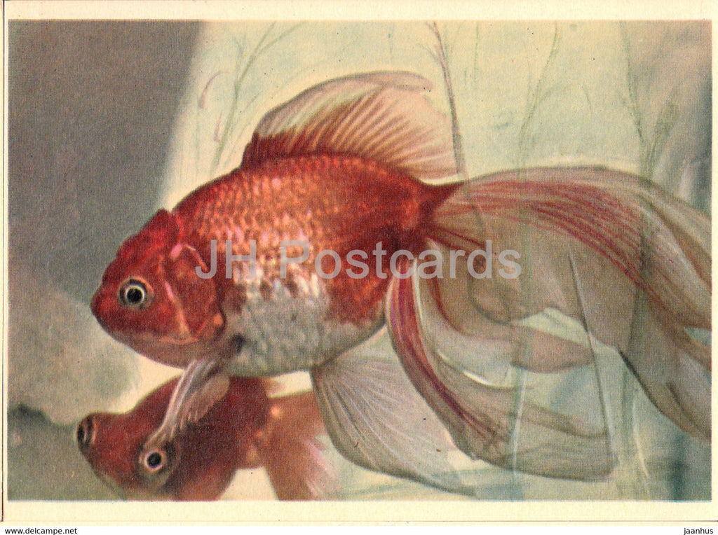 Fish - fishes - Moscow Zoo - 1963 - Russia USSR - unused - JH Postcards