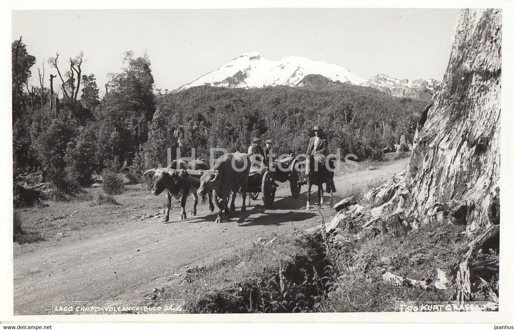 Lago Chapo - Volcan Calbuco - bull carriage - old postcard - 1955 - Chile - used - JH Postcards
