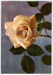 White Chick Rose - flowers - 1967 - Estonia USSR - unused - JH Postcards