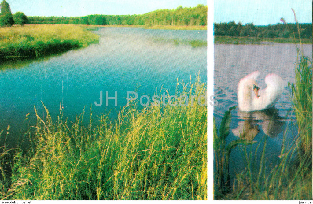 Belovezhskaya Pushcha National Park - A Man Made Lake - The Mute Swan - birds - 1981 - Berarus USSR - unused - JH Postcards