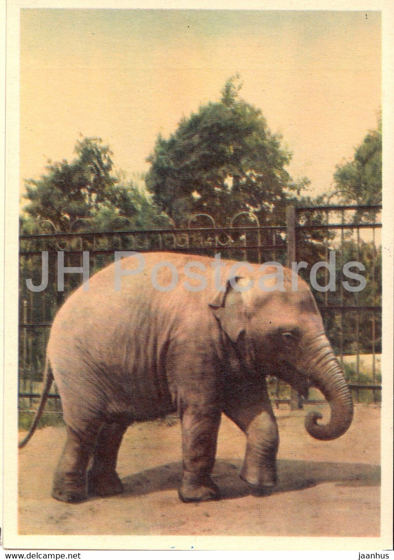 Indian elephant - Moscow Zoo - 1963 - Russia USSR - unused - JH Postcards