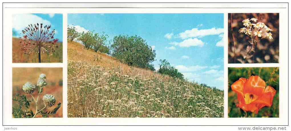 spring - flowers - Badhyz State Nature Reserve - 1981 - Turkmenistan USSR - unused - JH Postcards