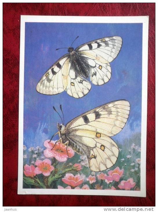 Apollo butterfly - Parnassius clarius - butterflies - 1986 - Russia - USSR - unused - JH Postcards