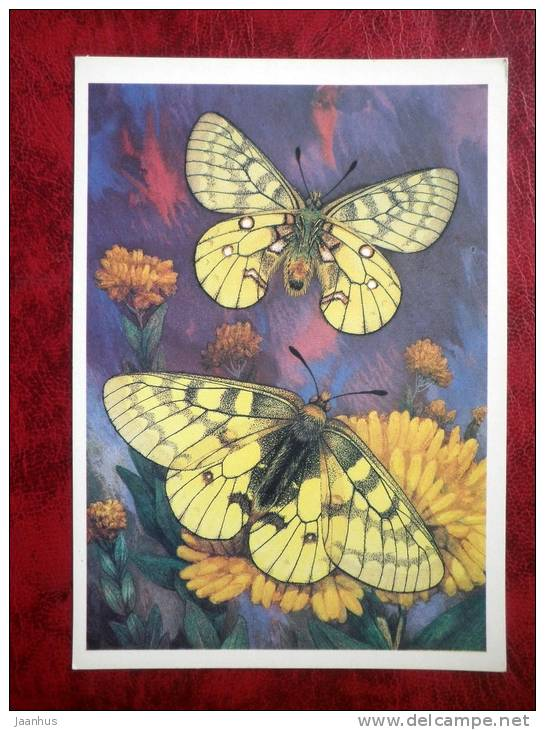 Eversmann's Parnassian - Parnassius eversmanni - butterflies - 1986 - Russia - USSR - unused - JH Postcards