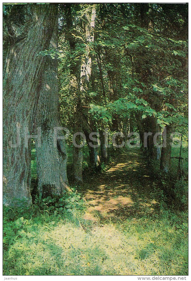 Mikhailovskoye , The Lime-Tree Alley , Kern Alley - Pushkin State Museum - 1982 - Russia USSR - unused - JH Postcards