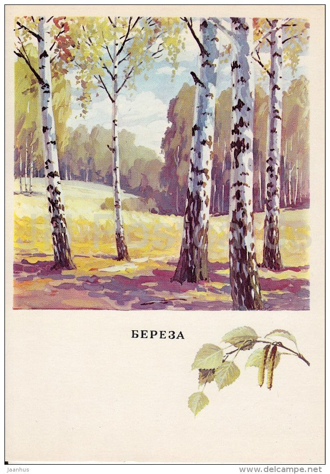Birch - Betula - Russian Forest - trees - illustration by G. Bogachev - 1979 - Russia USSR - unused - JH Postcards