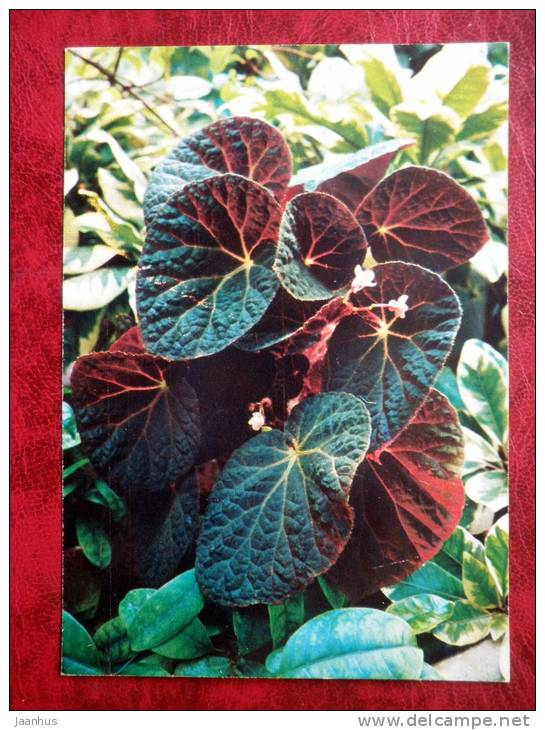 Begonia xanthina - flowers - 1987 - Russia - USSR - unused - JH Postcards