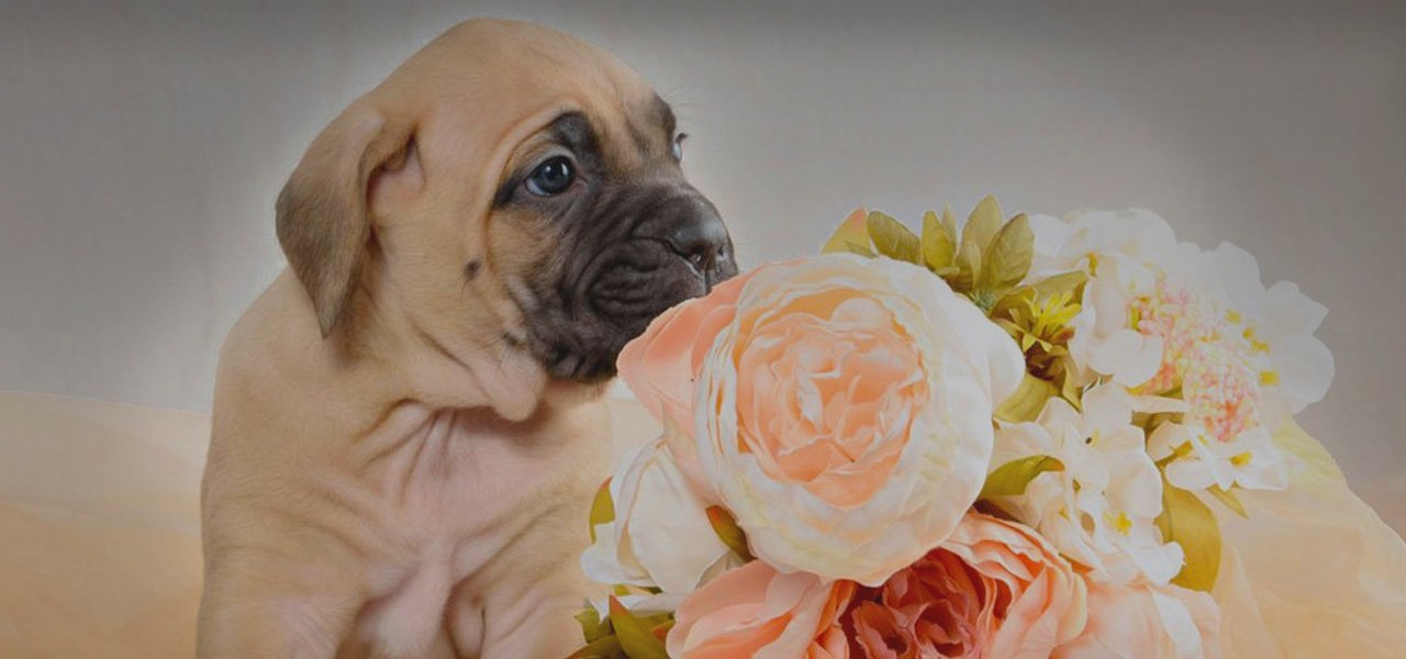 Pure Peonies Puppy & Bouquets