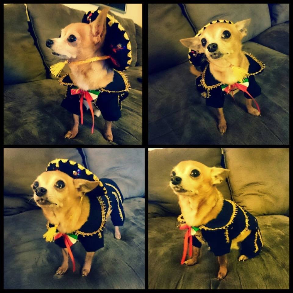 Dog Mariachi Outfit
