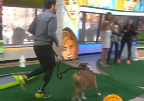 Today Show Demos Iron Doggy™ Hands-Free Leash