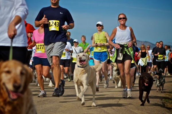 Runners with dogs - Iron Doggy hands free leash