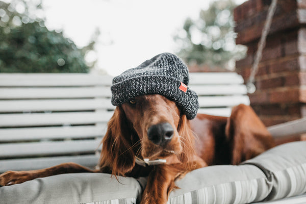 Iron Doggy-hands-free-leash-dog-sitting on porch-swing-with-hat