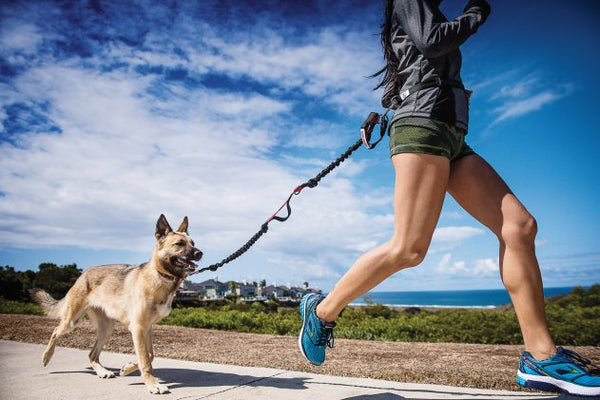 How Much Exercise Does Your Puppy Need- Puppy running