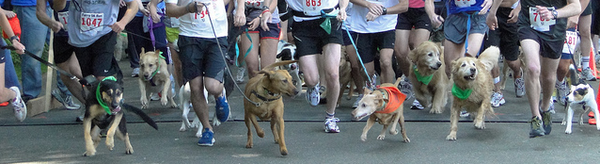 Iron DOggy hands free leash dog-friendly run events