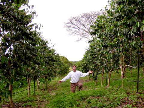Kona Joe Coffee field