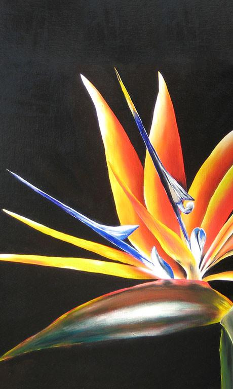 Bird of Paradise by deepa