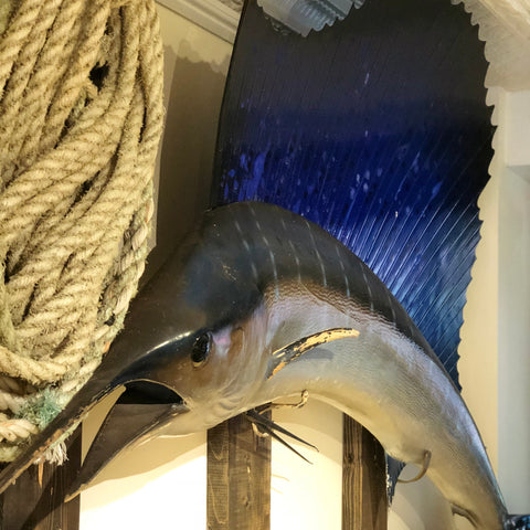 Vintage Taxidermy Marlin