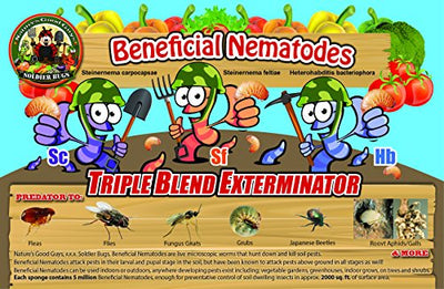 Termite Exterminator and Fleas DIY - Natural and Works 100% Results within 24 hours!