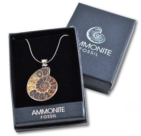 Ammonite Pendant Fossil Necklace - In Presentation Box - Yoga Studio