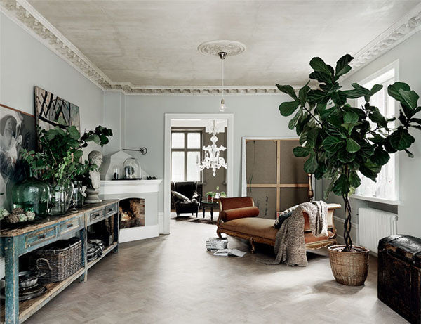 Indoor Plants - good for your health and great for your home