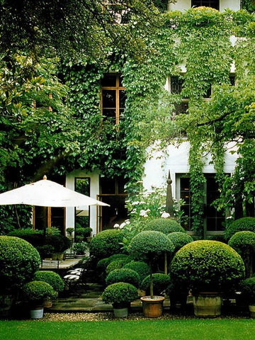 Outdoor dining with amazing box hedging