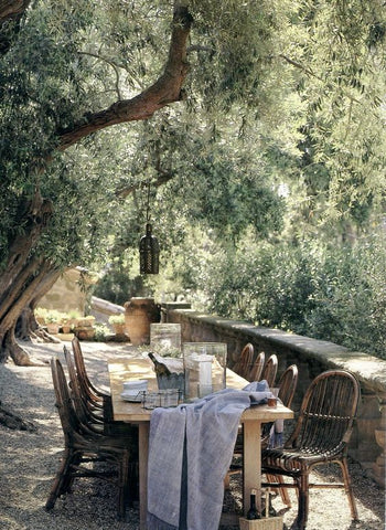 Outdoor dining with Olive tree for shade