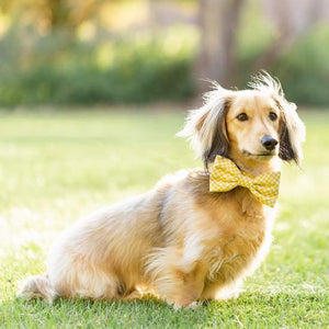 The Foggy Dog daffodil gingham bowtie