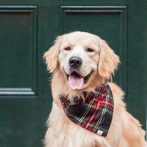 The Foggy Dog Stewart Plaid Wool Bandana