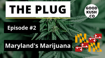 The Plug🔌  - Episode #2