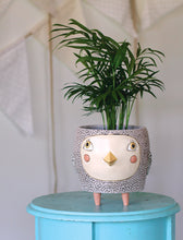 Load image into Gallery viewer, Bye Bye Birdie Planter - Pink