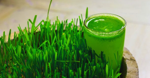 Diabetes Management To Weight Loss: 6 Benefits Of Wheatgrass Juice - The Miracle Drink [NDTV]