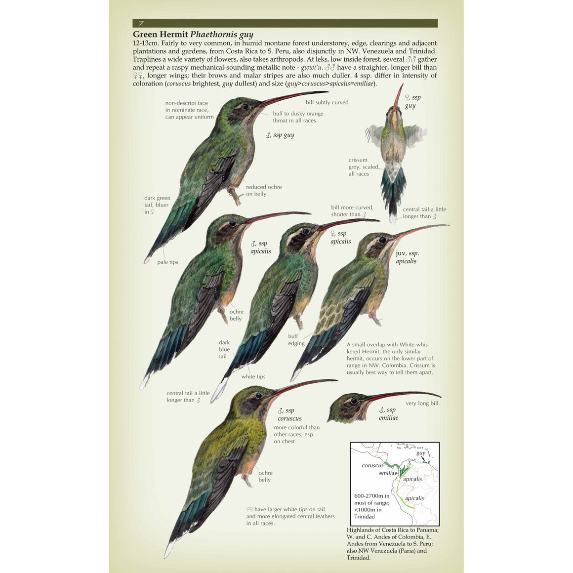 Field Guide to the Hummingbirds