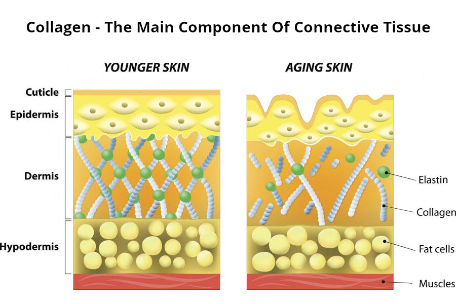 Collagen – Hair Building Blocks?