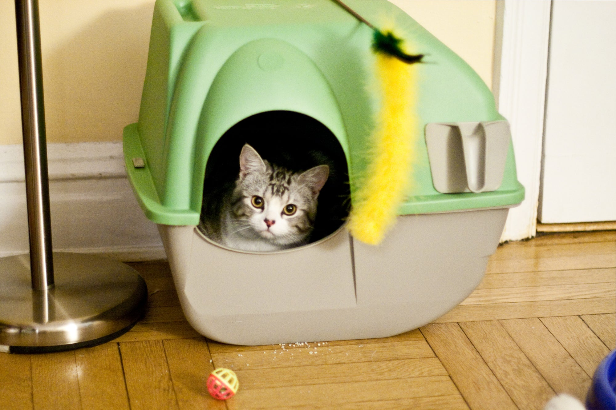Cat Litter Box by Tom Thai/Wikimedia
