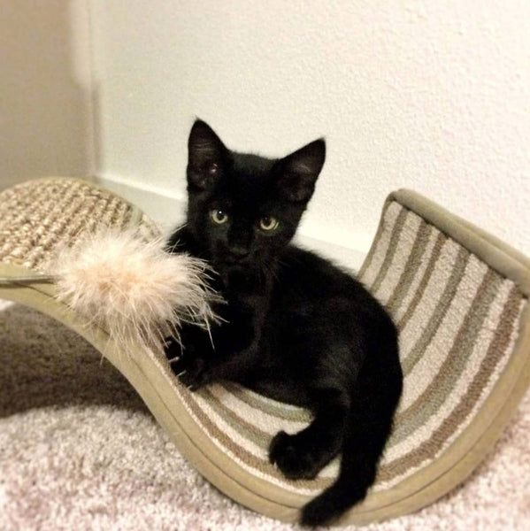 Rover as a kitten sitting on a cat scratcher
