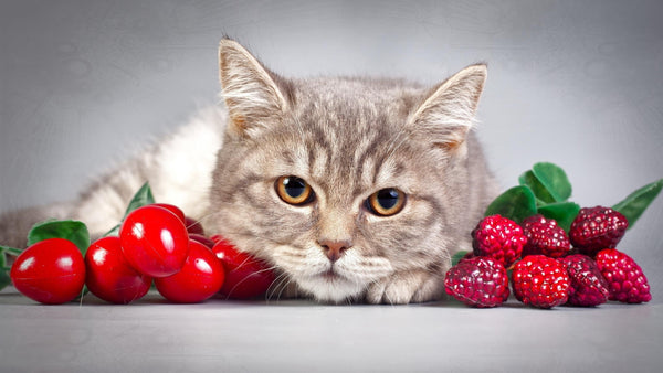 Cat with cherries and raspberries