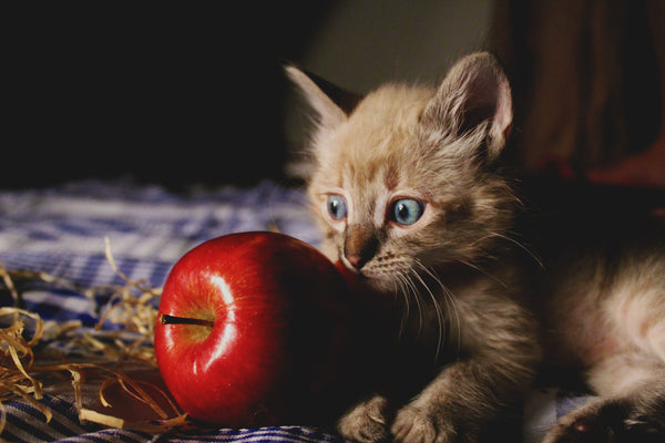 Cat with apple