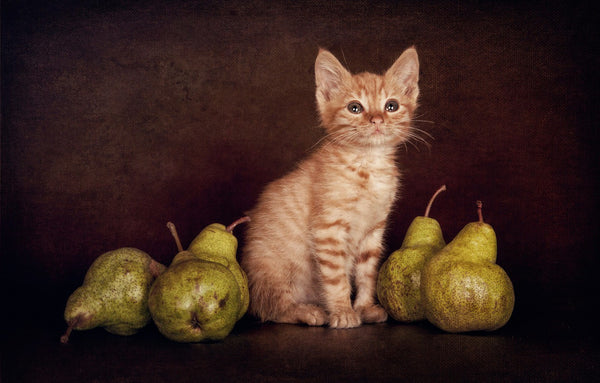 Cat with pears