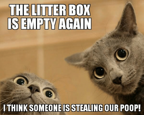 The Litter Box is Empty Again Meme