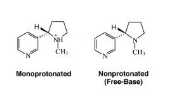 Difference between Free Base Nicotine and Nicotine Salt