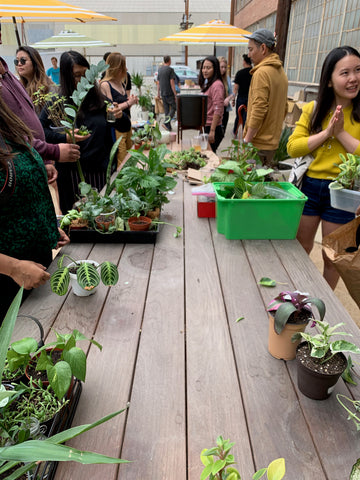 House plant lovers talking plants at a plant swap.