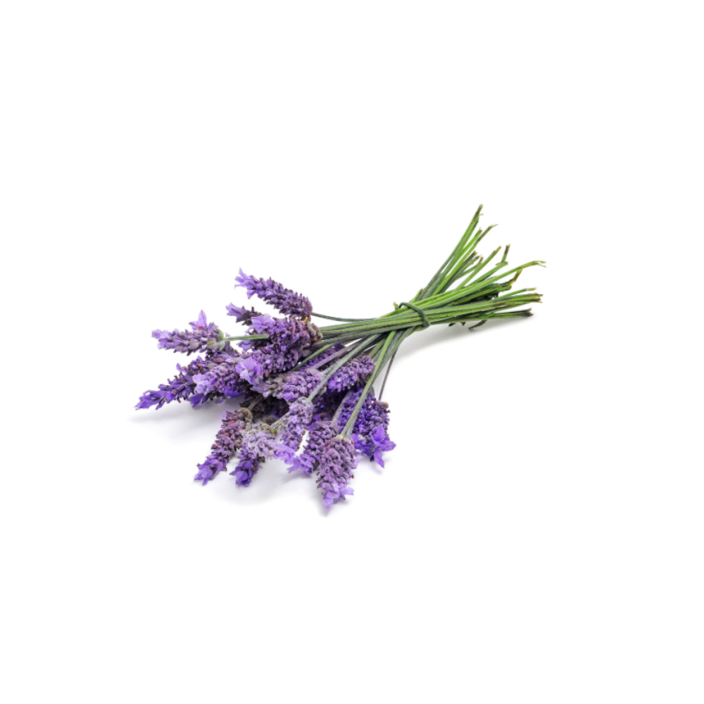 DoTERRA Essentials Oils - Lavender Oil