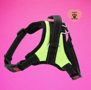 The Big Spot Harness yellow / green