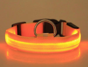 Night Light LED Dog Collar Orange