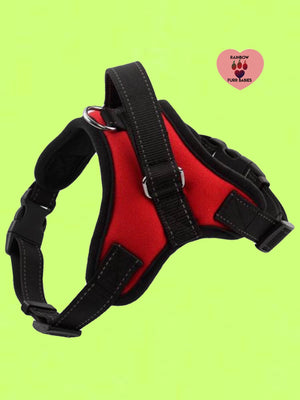 The Big Spot Harness Red